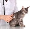 Ветеринарные клиники в Белоярске